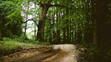 ¿Naturaleza te hace rezar?