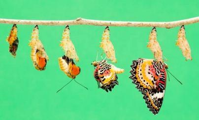 Las mariposas y los renacuajos